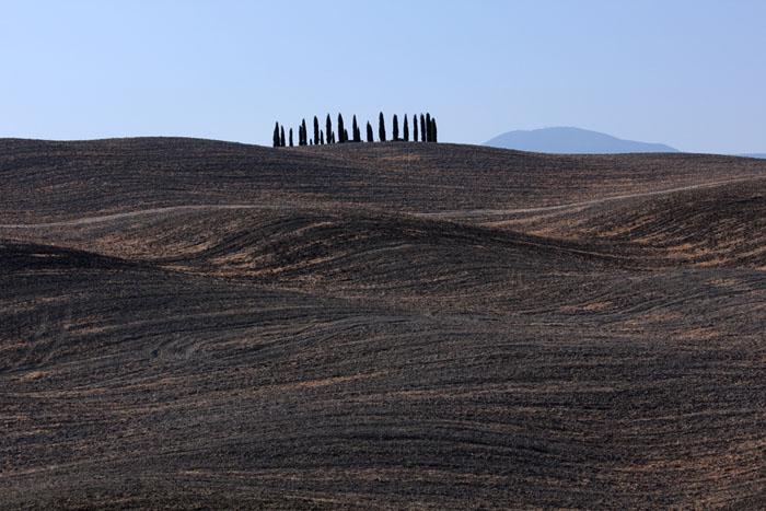 Cipressi in Val d'orcia