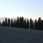 Cipressi Val d'orcia