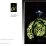 Visionary series -COD: BDAVI19