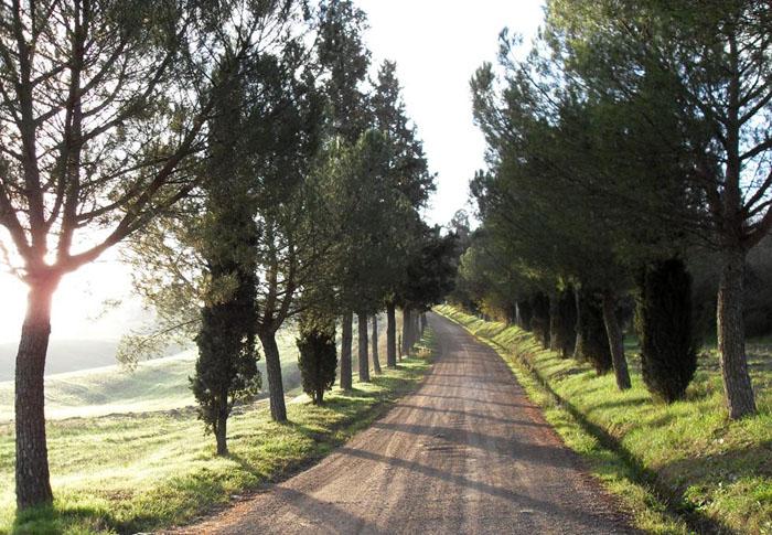 Strada di campagna a Lucignano