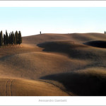 Cypresses near Quirico November 2012-120x40cm