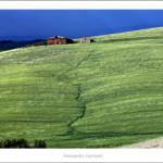 Green hills near Monteroni d'Arbia 2013 size 120x50