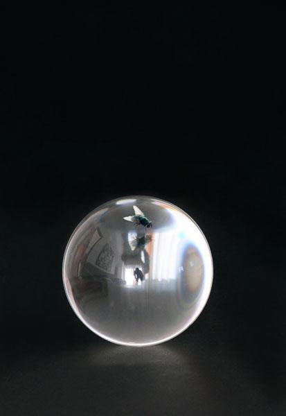 The fly -2013digital photo elaboration