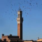 Siena-torre del mangia
