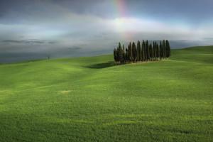 Cypresses near San Quirico (Siena)
