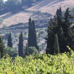 Cipressi a Sant'Antimo