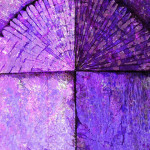Purple Peacock-graphic elaboration