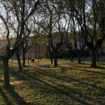 IMG_0385alberi